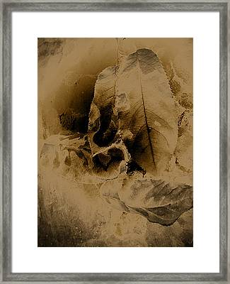 Leaves In Sepia Framed Print