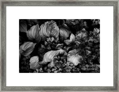 Leaves In Spring Framed Print by Masako Metz