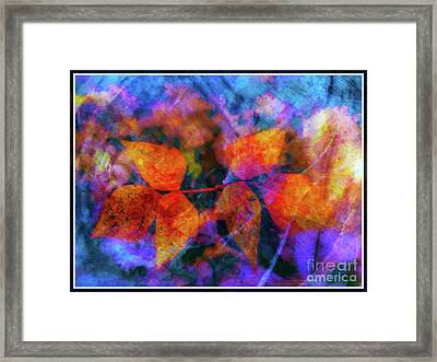 Leaves In The Storm Framed Print by Judi Bagwell