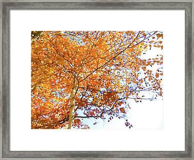 Leaves In The Trees Framed Print