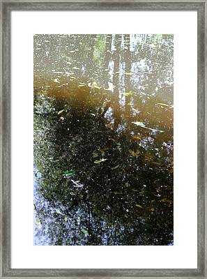 Leaves In The Water 2 Framed Print by KMK Nature Photography