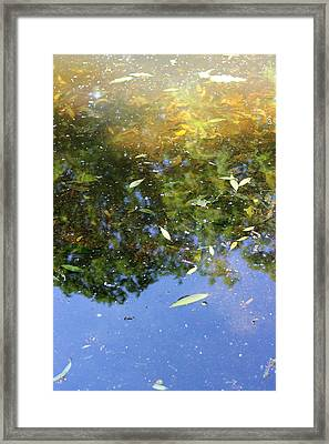 Leaves In The Water Framed Print by KMK Nature Photography