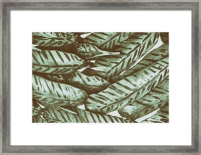 Leaves No. 3-1 Framed Print