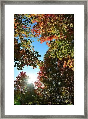 Leaves Of Change Framed Print