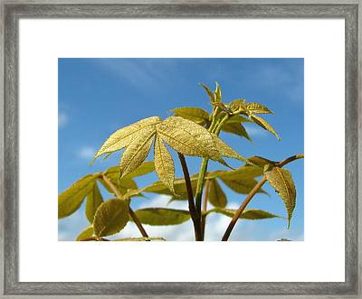 Framed Print featuring the photograph Leaves Of Gold by Peg Urban