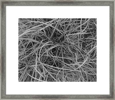 Leaves Of Grass Framed Print