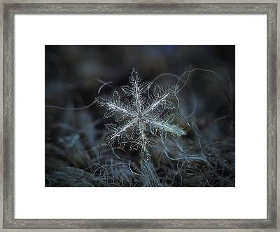 Leaves Of Ice Framed Print