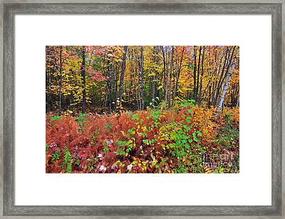 Leaves Of Many Colors  Framed Print by Catherine Reusch Daley