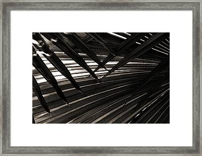 Leaves Of Palm Black And White Framed Print by Marilyn Hunt