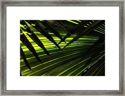 Leaves Of Palm Color Framed Print by Marilyn Hunt