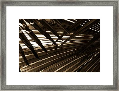 Leaves Of Palm Sepia Framed Print by Marilyn Hunt