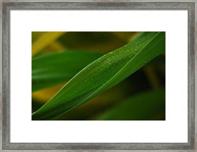 Leaves Of Paradise Framed Print by Susette Lacsina