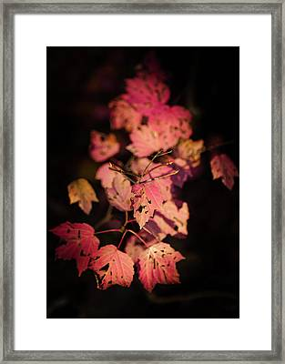 Framed Print featuring the photograph Leaves Of Surrender by Karen Wiles