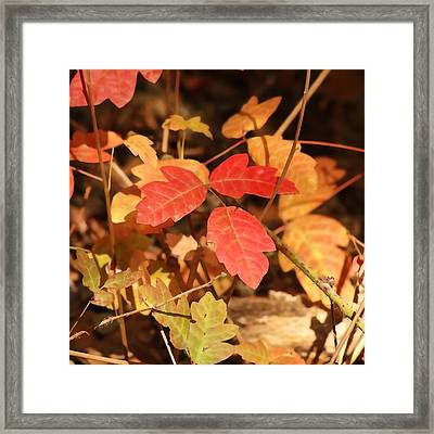 Leaves Of Three Framed Print