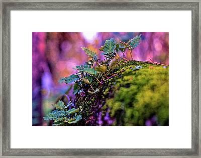 Leaves On A Log Framed Print