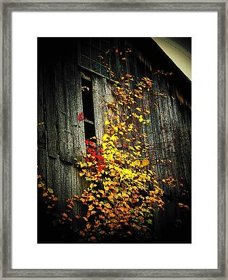 Leaves On An Old Barn Framed Print by Joyce Kimble Smith