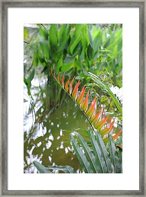 Leaves On Fire Framed Print by Jessica Rose