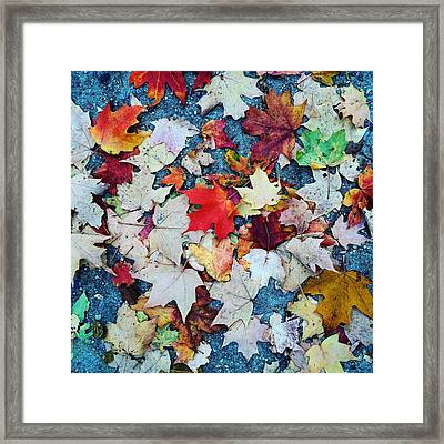Leaves On The Sidewalk Framed Print by Robert Nguyen