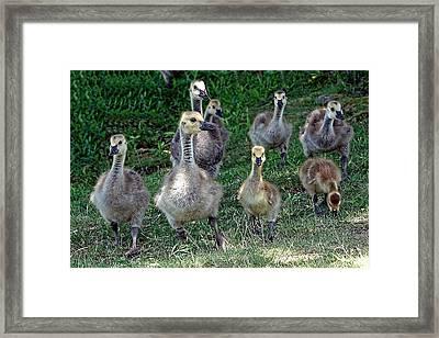 Leaving The Nest Framed Print by Edward Sobuta