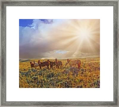 Led By The Light Framed Print