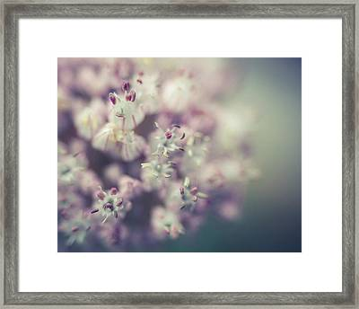 Leek Flower Framed Print