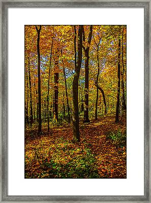 Left Or Right? Lost In The Woods Framed Print by Roger Passman