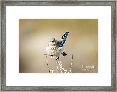Left Wing Test Framed Print by Mike Dawson