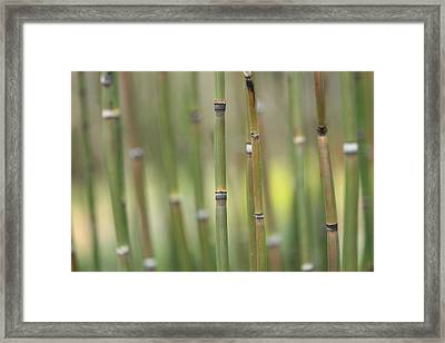 Legend Framed Print by Connie Handscomb
