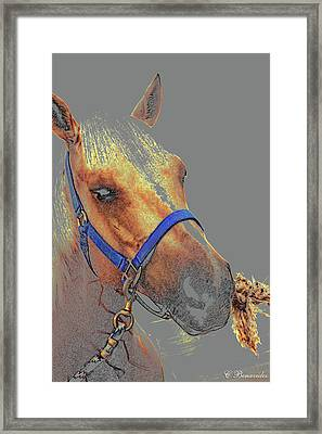 Legend Of A Horse Framed Print