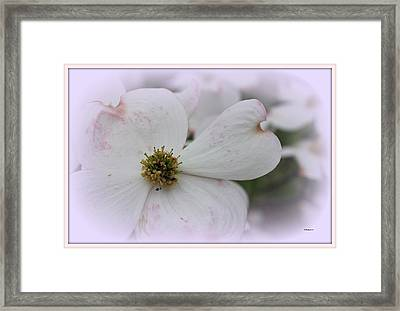 Legend Of The Dogwood Framed Print by Betty Northcutt