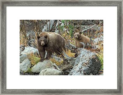 Legends Of The Fall Framed Print