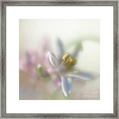 Framed Print featuring the photograph Lemon Blossom by Elena Nosyreva