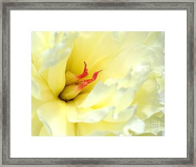 Lemon Chiffon I Framed Print by Valerie Fuqua