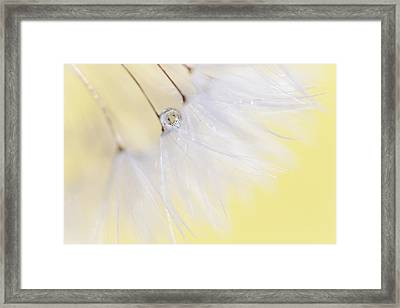 Framed Print featuring the photograph Lemon Drop by Amy Tyler