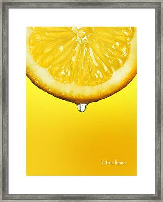Lemon Drop Framed Print by Mark Rogan