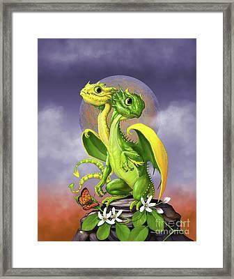 Lemon Lime Dragon Framed Print by Stanley Morrison