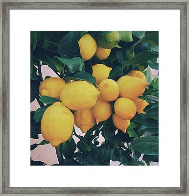 Lemon Tree Framed Print by Happy Home Artistry