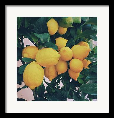 Fruit Tree Photographs Framed Prints
