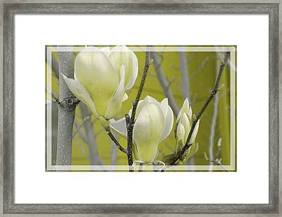 Framed Print featuring the photograph Lemon Yellow by Athala Carole Bruckner