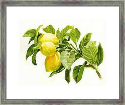 Lemons On A Branch Framed Print