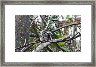 Lemur Scared Of Heights Framed Print by Tim Michael Ufferman