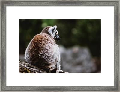 Lemur Side Portrait Framed Print