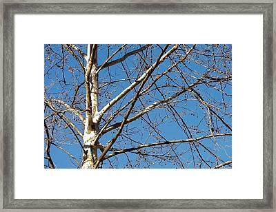 Lenox Sky Framed Print by JAMART Photography