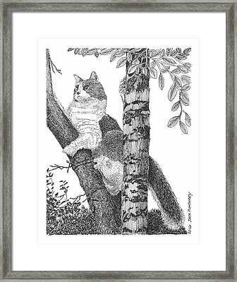 Leo The Cat In The Tree Framed Print