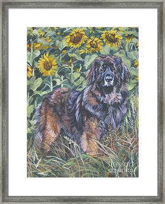 Leonberger In Sunflowers Framed Print by Lee Ann Shepard