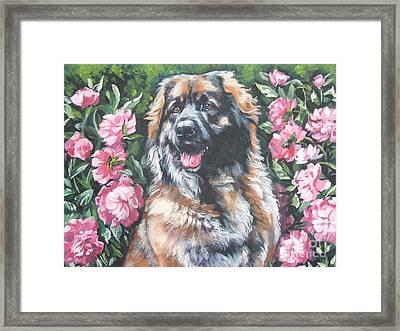 Leonberger In The Peonies Framed Print