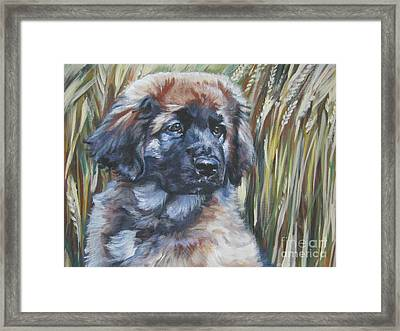 Leonberger Pup Framed Print by Lee Ann Shepard
