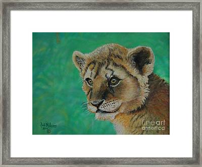 Leonidas   The Young Lion King Framed Print by Bob Williams