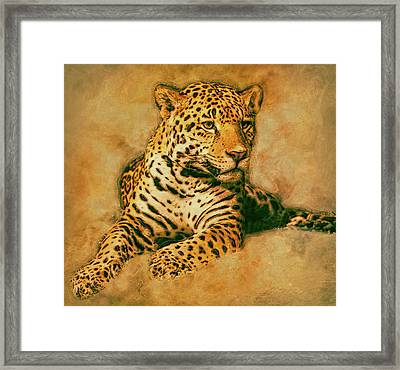 Leopard 3 Framed Print by Jack Zulli