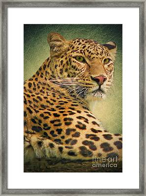Leopard Framed Print by Angela Doelling AD DESIGN Photo and PhotoArt